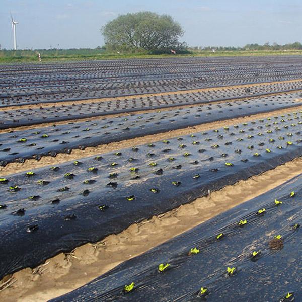 mulch_film_nz_compostable_mulch_horticulture