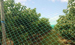 Moonlight-Protect Bird Netting